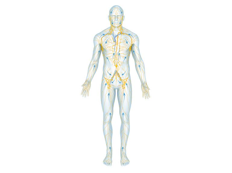 lymphknoten zwischen den beinen