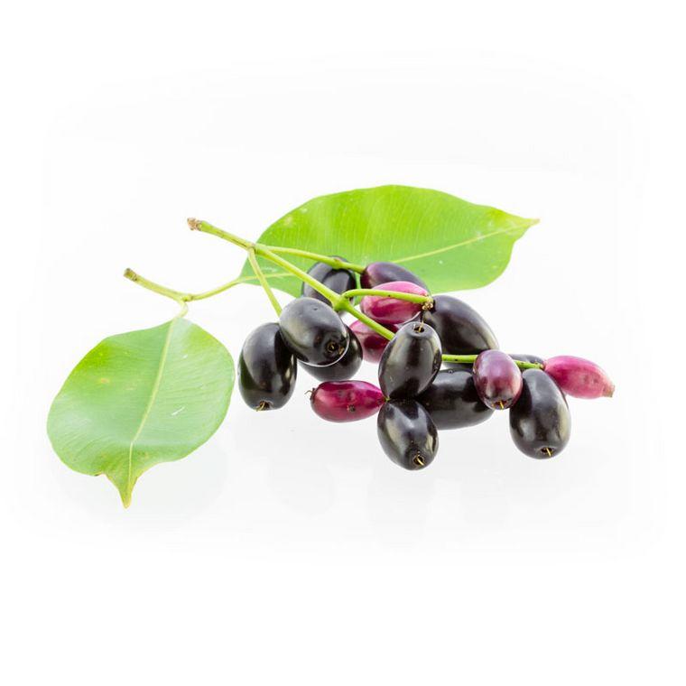 Jambulbaum