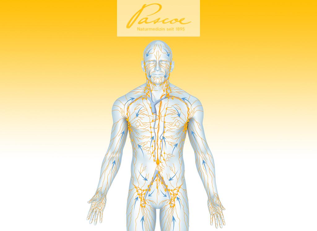 Grafik Lymphsystem Mensch