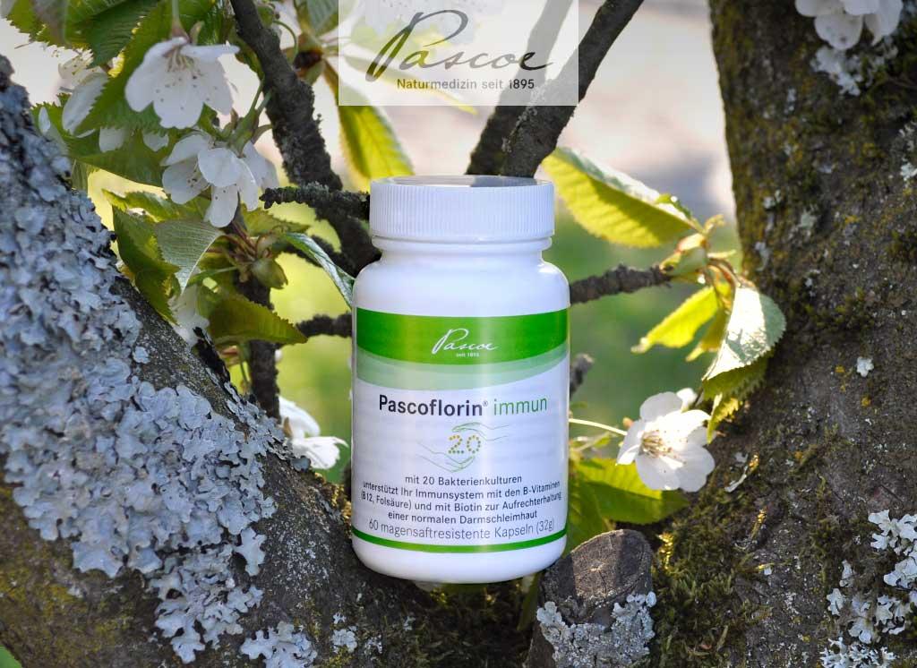 Pascoflorin immun