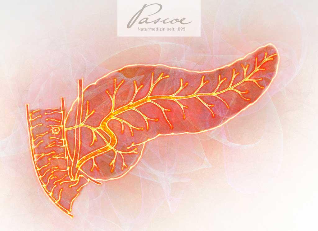 Die Bauchspeicheldrüse