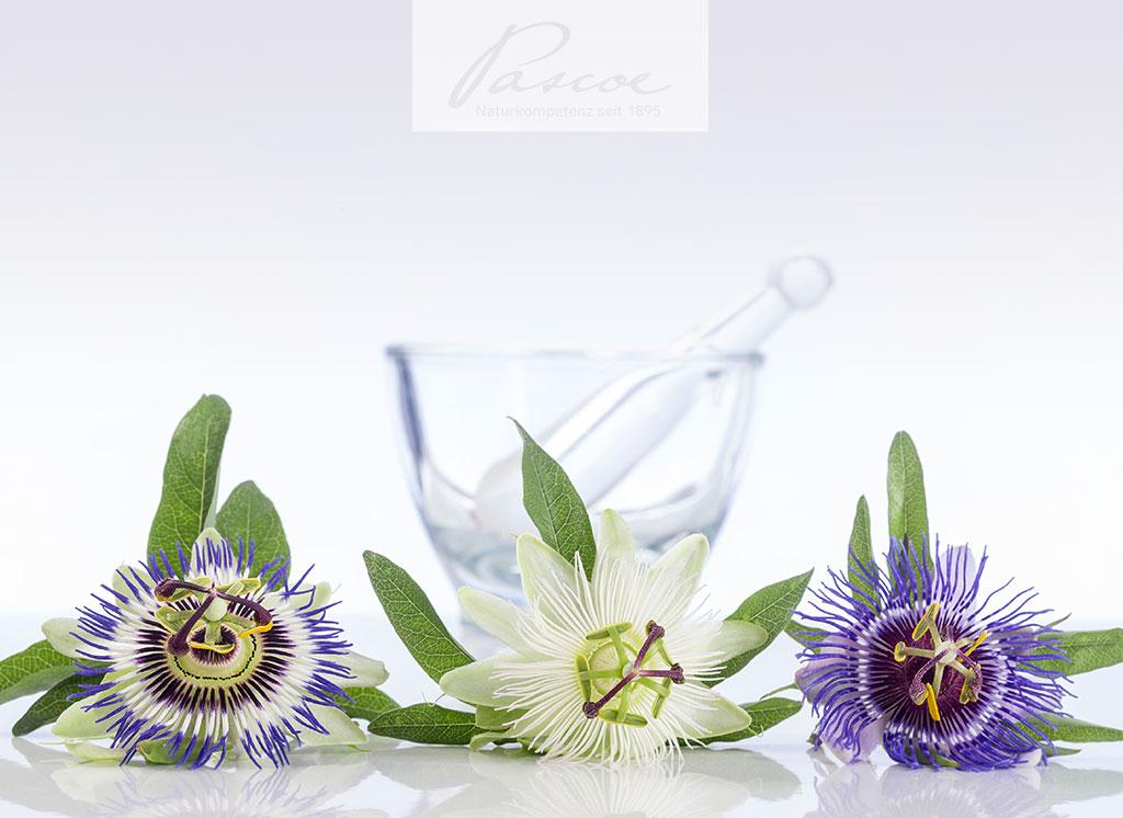 Passionsblume: Eine ausgesprochen vielfältige Pflanzenfamilie mit interessanten Vertretern